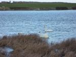 Lough Murree