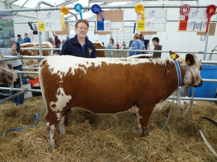 Valerie Orr, Ballygowan, with Irish Moiled breed