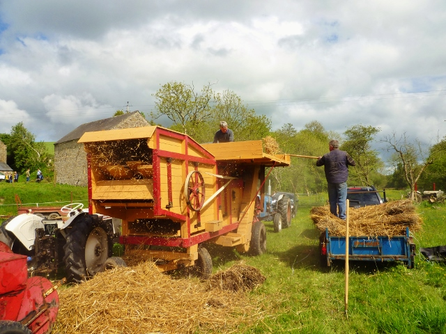 Thresher in action