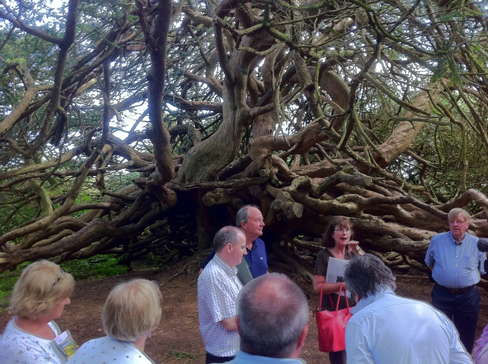 Yew Tree at Crom estate, Co.Fermanagh Photo: © Michael Fisher