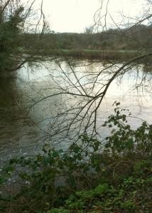 River Lagan near Stranmillis  Photo: © Michael Fisher
