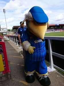 AFC Wimbledon mascot Haydon the Womble  Photo: © Michael Fisher