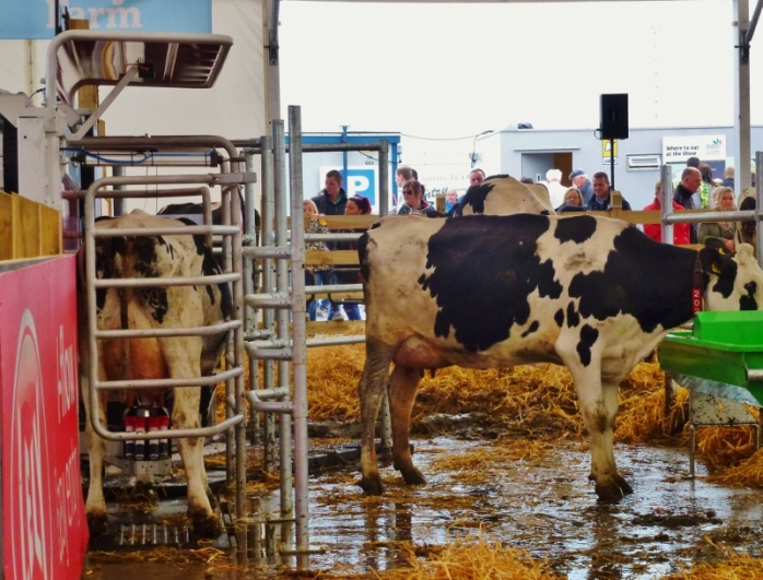 Lely robotic milking machine at Balmoral Show  Photo:  © Michael Fisher